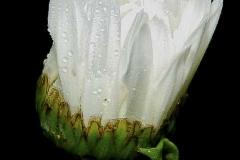 bild1a_13_-crop-u646